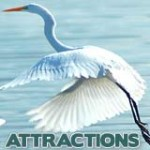 Florida's Top Attractions, FL Attractions