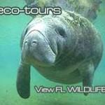 Everglades Nature Tours FL Activities