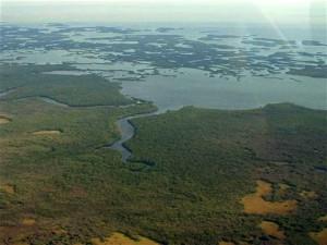 10,000 islands- FL Fishing Charters